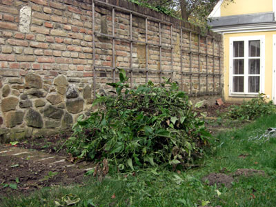 herbst-biomasse-pict0002.jpg